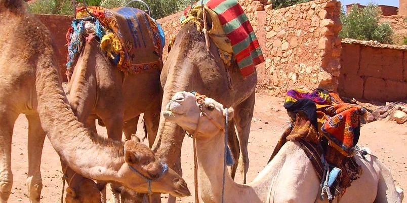 Kasbah Ait Ben Haddou-Marocco