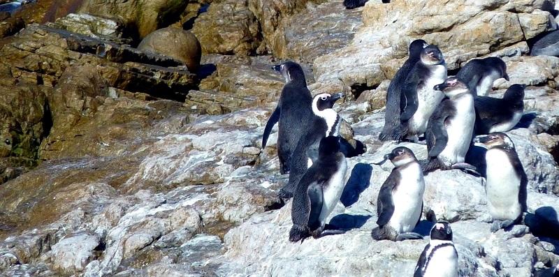 Penisola del Capo-Sudafrica